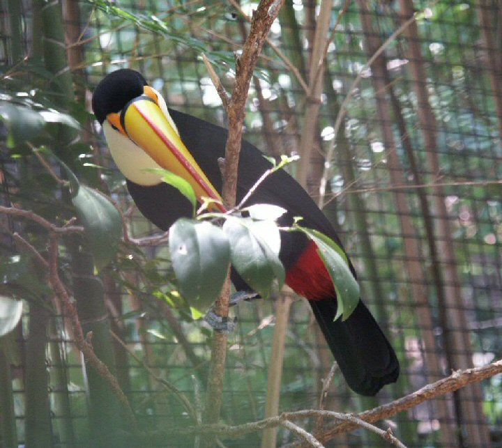 Toucan Eggs That toucans have in the