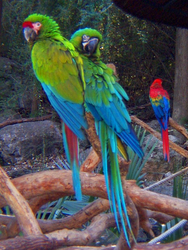 What Food Do Macaws Eat