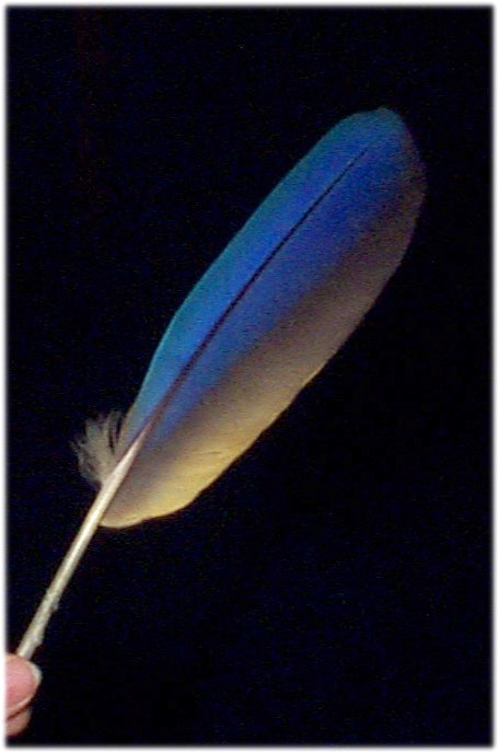 feather12.JPG